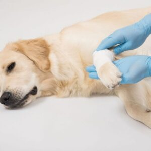 How do I know if my pet has been poisoned?