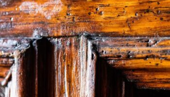 Signs of woodworm in wood