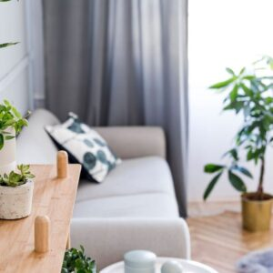 How to protect your indoor plants from pests and diseases