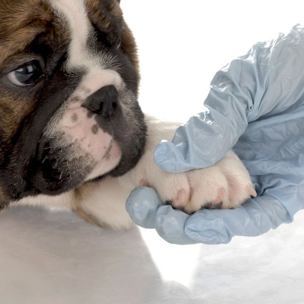 Did you know that acupuncture can also ease your dog's pain?
