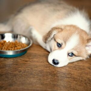 Therapeutic diets in animals: what do they consist of?