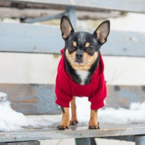 Dogs get cold: myth or reality?