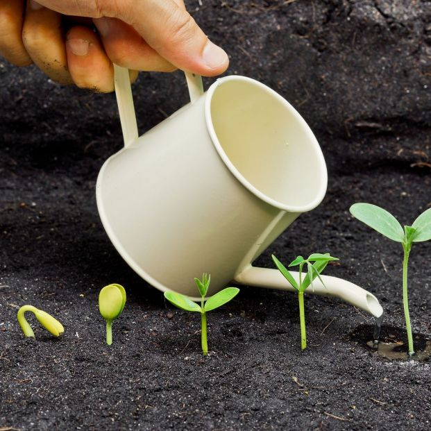 Do you know how a seed germinates?