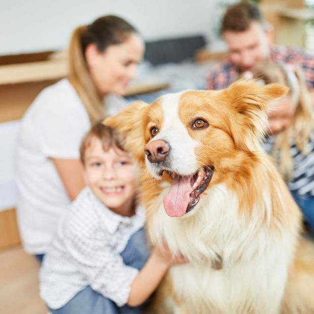 First guidelines to follow with a newly adopted dog