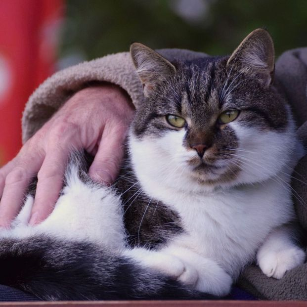 Can your cat transmit toxoplasmosis disease to you?